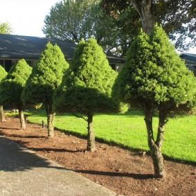 декоративные растения для сада фото дизайна