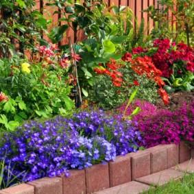 декоративные растения для сада дизайн идеи
