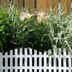 декоративный забор для сада идеи оформление