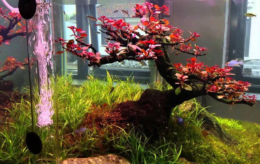 Дерево внутри аквариума в гостиной комнате
