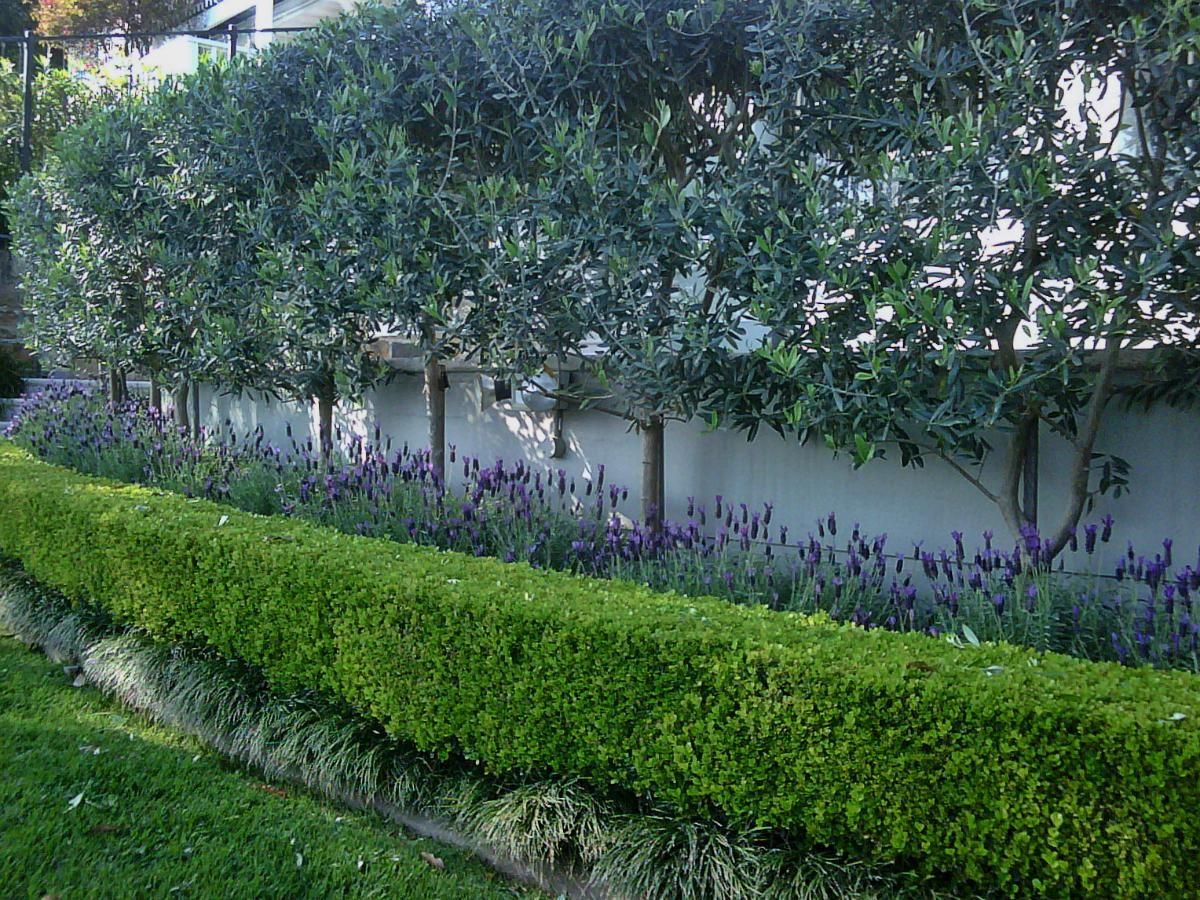 деревья вдоль забора