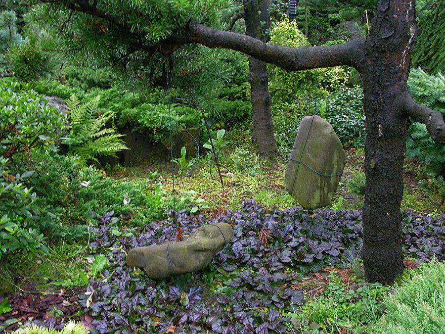 Формирование кроны сосны с помощью тяжелых камней