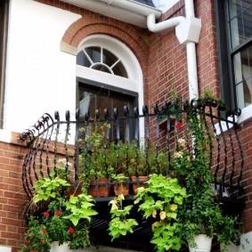 Живые растения на открытом балконе