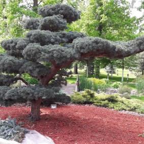 Мульчирование древесной щепой приствольного круга растений