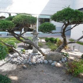 Бансай из лиственного дерева на каменистом участке