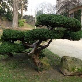 Садовый бансай из лиственного дерева