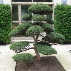 Бансай в саду в неформальном стиле