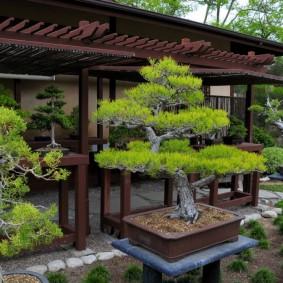 Горшки с карликовыми деревьями около беседки в восточном стиле