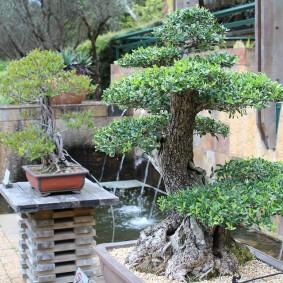 Садовый бансай из старого дерева