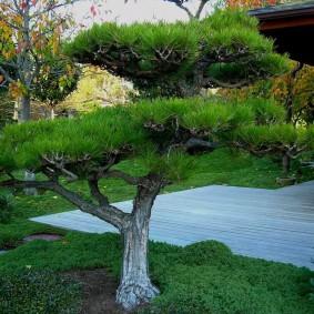 Садовый бансай из пластичного деревца