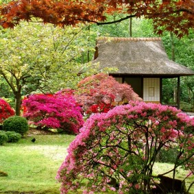 Кустарники с красной листвой в ландшафте сада
