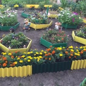 Цветущие бархатцы на клумбе загородного участка
