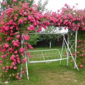 Цветущие розы на садовых качелях