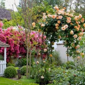 Китайская арка с плетистыми розами