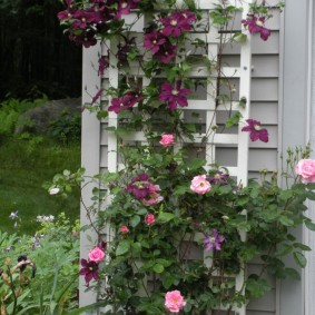 Вьющиеся растения на деревянной решетке