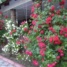 Крыльцо загородного дома с цветущими розами