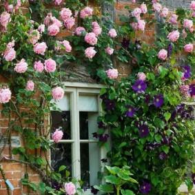 Нежно-розовые цветки вокруг окна кирпичного дома