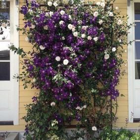 Садовая решетка с вьющимися розами
