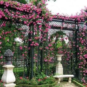 Плетистые розы в ландшафте современного сада