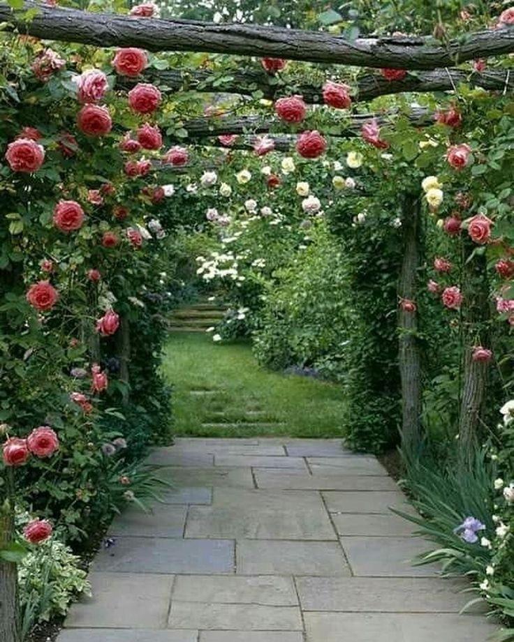 остановил плетущиеся розы в саду фото можно меняться, если