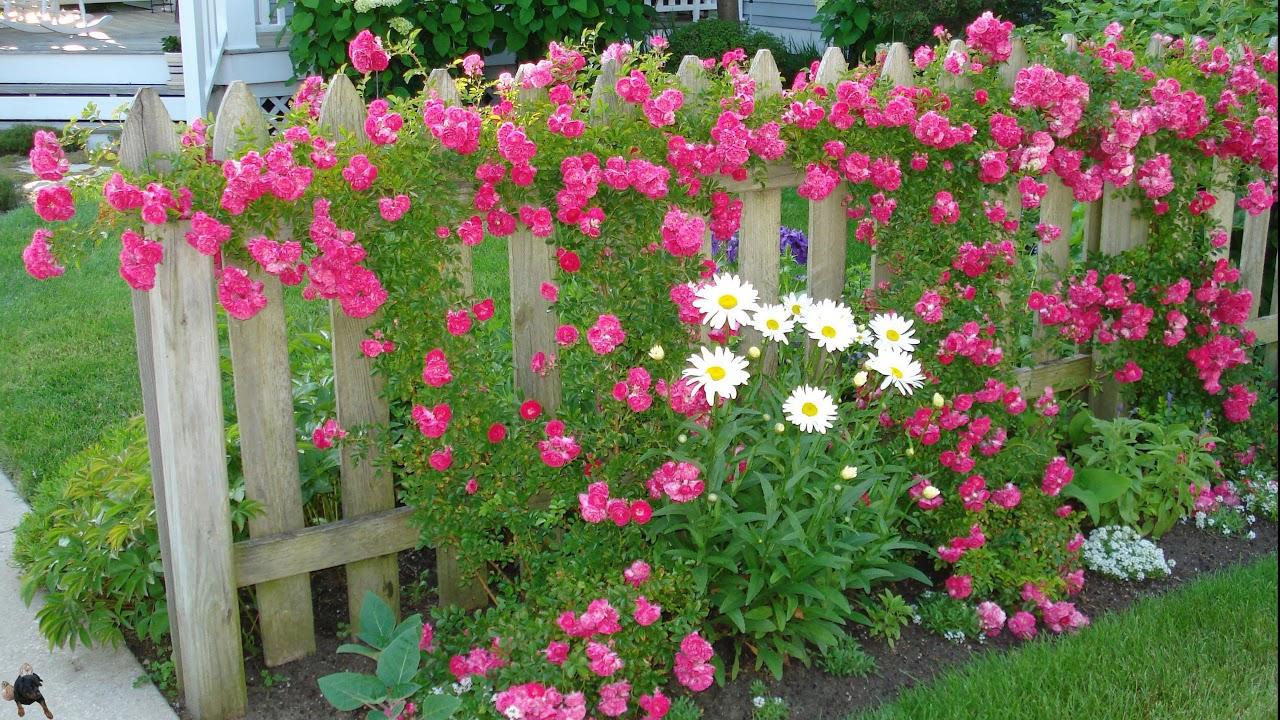 прошивки эбу какие цветы посадить вдоль забора фото огромными