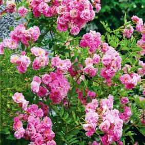 Светло-розовые цветки на зеленых ветках