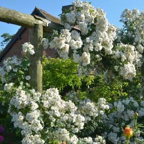 Мелкие цветки белого окраса
