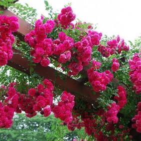 Розовые цветки на деревянных балках