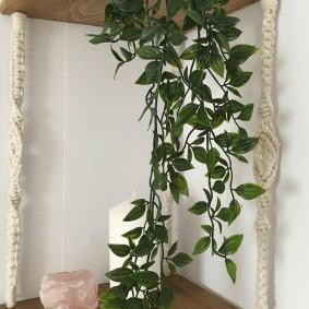 Деревянная полка для комнатных растений