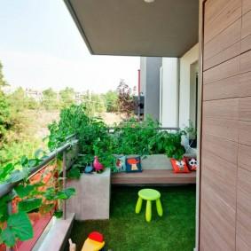 Комнатные растения на открытом балконе