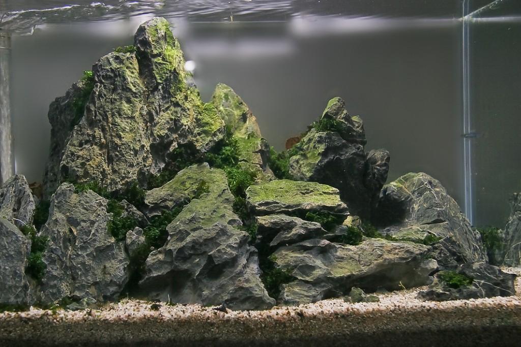 Декоративные камни за стеклом комнатного аквариума