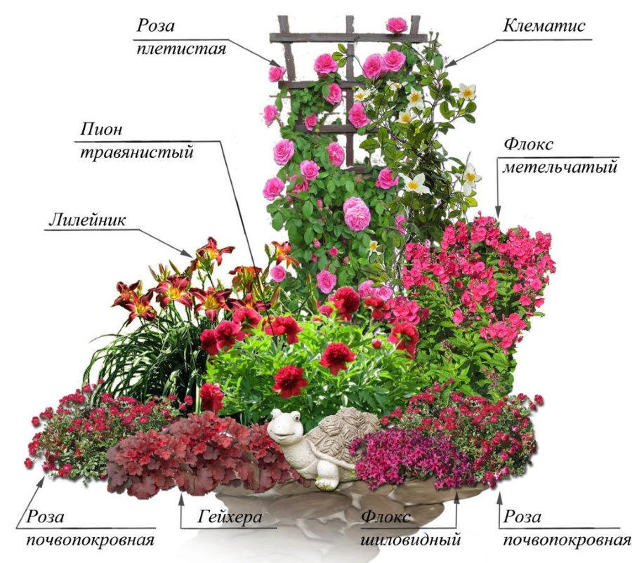 Схема клумбы с розами и другими цветами