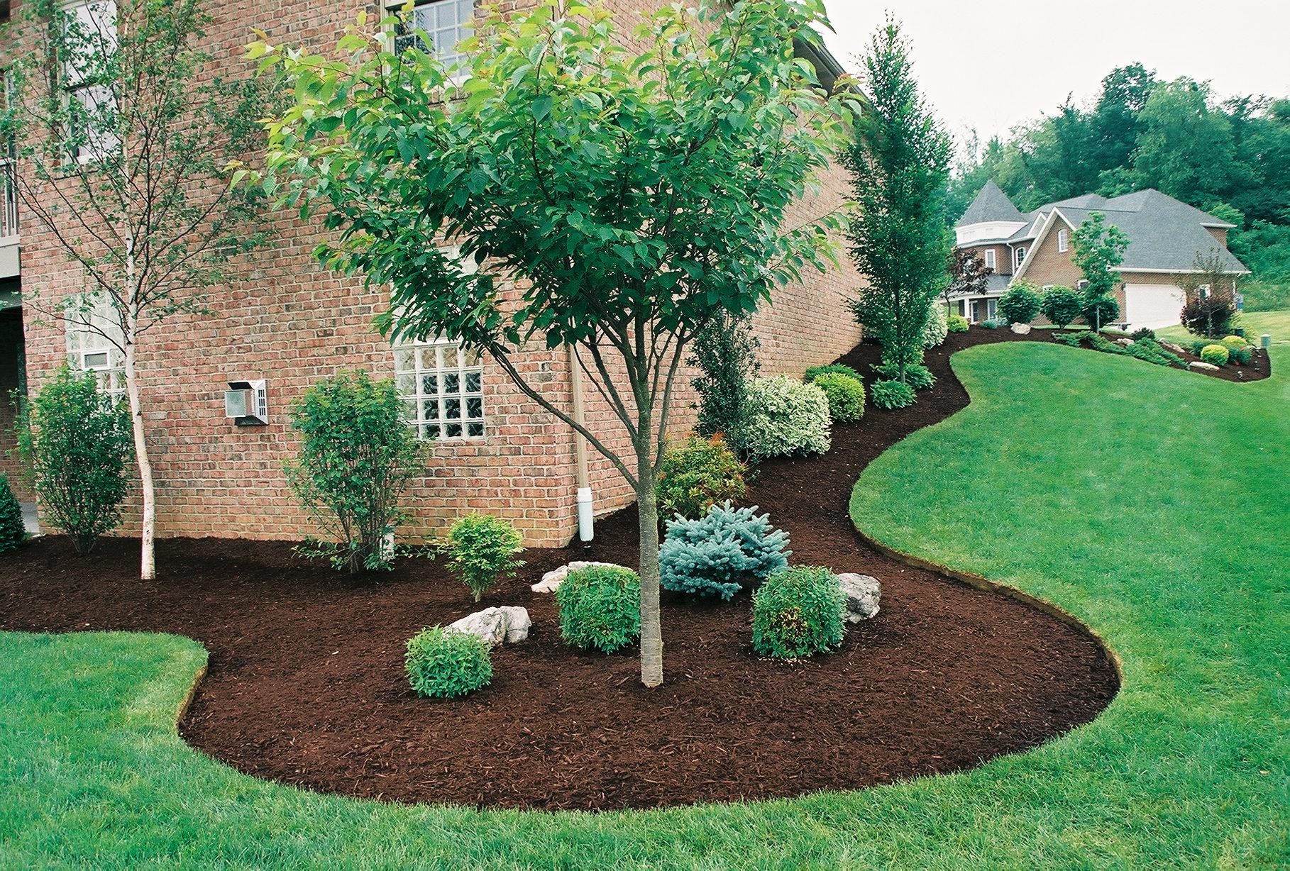 ландшафтный дизайн с деревьями фото