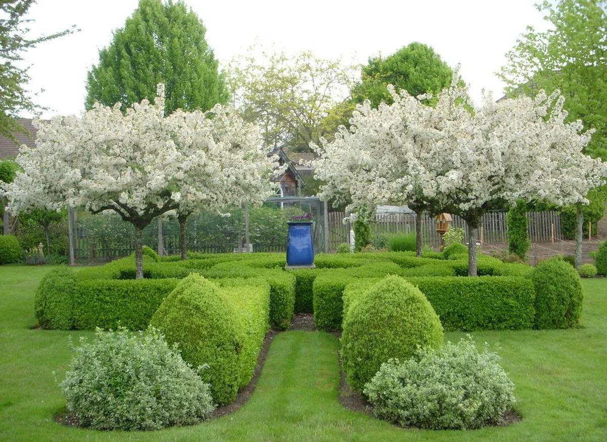 ландшафтный дизайн с деревьями идеи