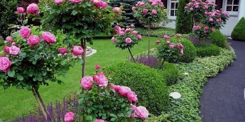 ландшафтный дизайн с розами