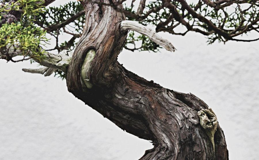 Голый ствол дерева в стиле японского сяримики