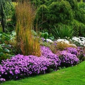 многолетние растения фото