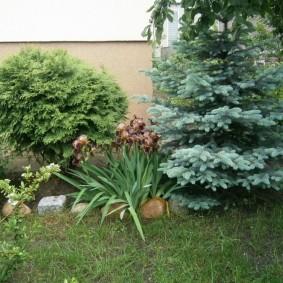озеленение участка фото декор