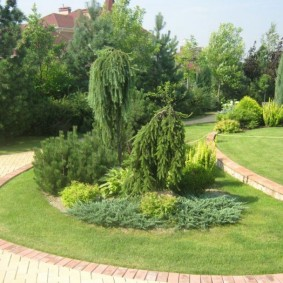 озеленение участка виды декора