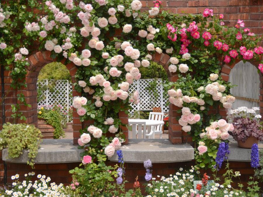 Плетистые розы на кирпичных арках в саду