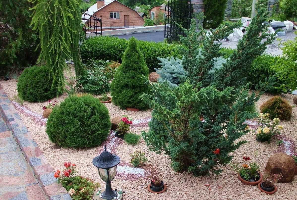 растения в дизайне сада