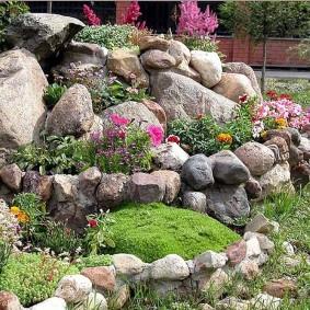 растения для альпийской горки декор фото