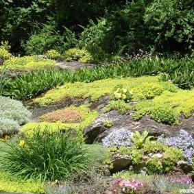 растения для альпийской горки идеи декор