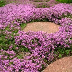 растения для альпийской горки идеи декора
