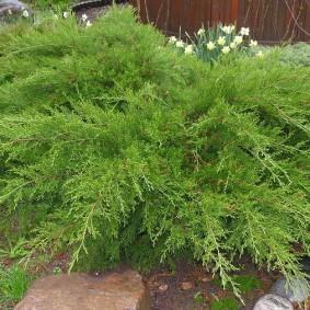 растения для альпийской горки оформление