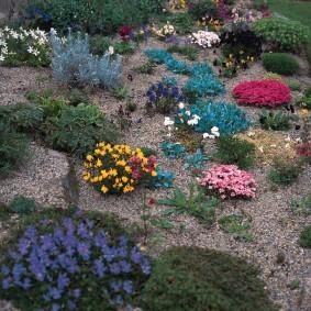 растения для альпийской горки оформление фото