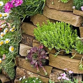 растения для альпийской горки фото оформление