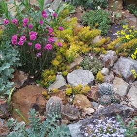 растения для альпийской горки фото оформления