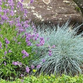 растения для альпийской горки оформление идеи