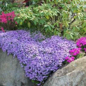 растения для альпийской горки идеи